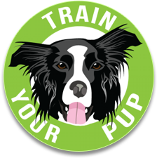Train Your Pup