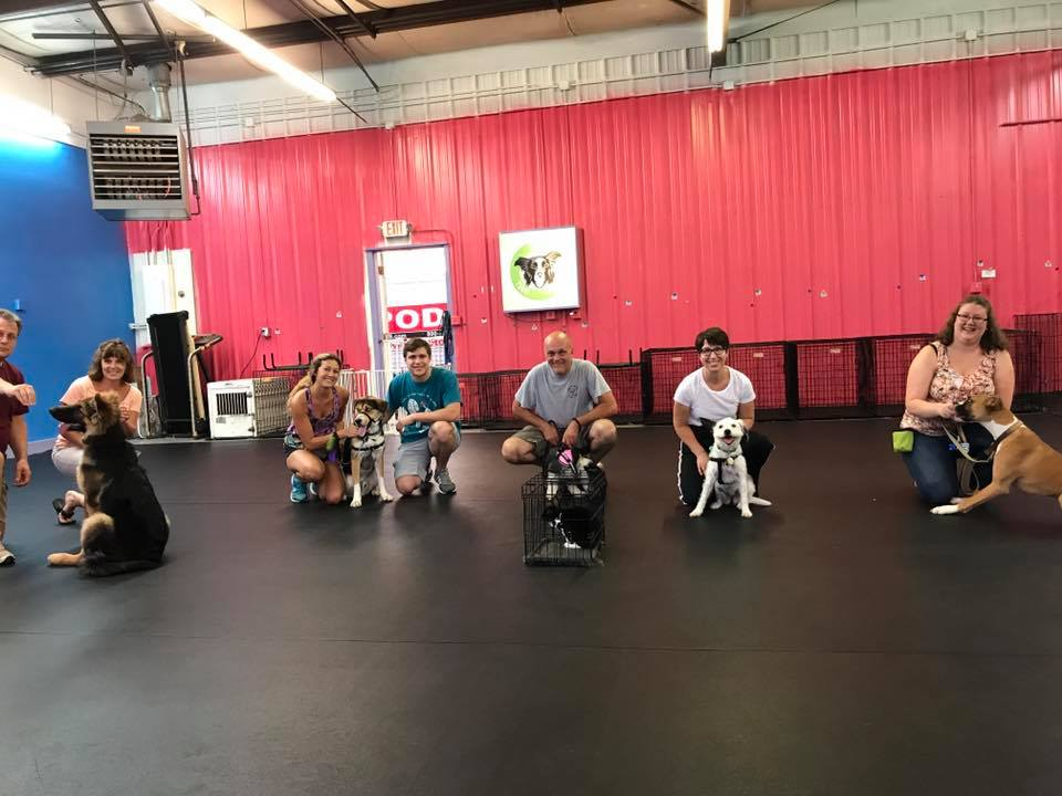 Dog Obedience Classes Dayton OH - Group Behavior Training | Train Your Pup - 20883095_1062429780561112_6940195876906752728_n