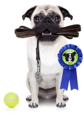 Dog Training - Puppy & Obedience Training in Dayton Ohio - Train Your Pup - dog